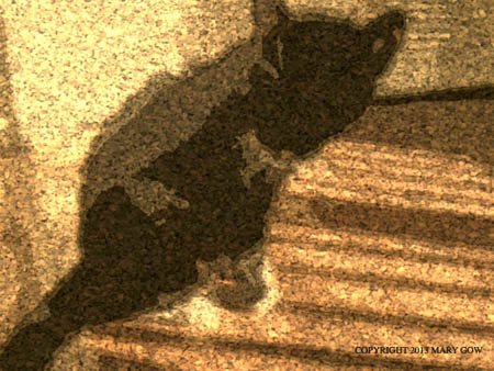 Spontaneous photo of Shadow in the sun, using the camera app, Paper Artist. Photo by Mary Gow.